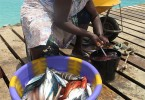 Milá prodavačka a kuchačka ryb