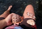 Super mušle na jedné z pláží
