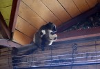 Ten lemur mi ze stolu ukradl chleba! :-)