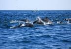 Výlet za delfíny