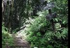 Nádherná lesní cesta