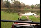Cesta na safari