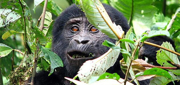 Uganda – barevná perla Afriky