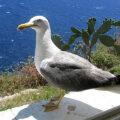 Korsika fotogalerie