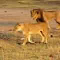 Zambie & Zimbabwe fotogalerie