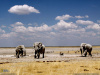 namibia3_small