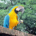 Francouzská Guyana fotogalerie