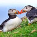 Faerské ostrovy – chladná krajina s velkým srdcem