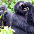 Rwanda, Sao Tome a Principe fotogalerie